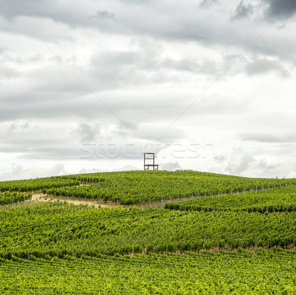 Vineyards of the Kaiserstuhl region, Baden-Wurttemberg, Germany  Stock photo © meinzahn