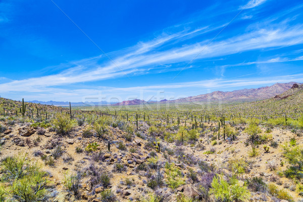 beautiful mountain desert landscape with cacti Stock photo © meinzahn