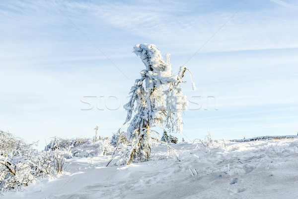 Sunshine under the winter calm mountain landscape with beautiful Stock photo © meinzahn