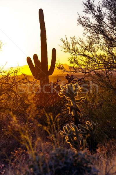 Cactus woestijn romantische zonsondergang zon landschap Stockfoto © meinzahn