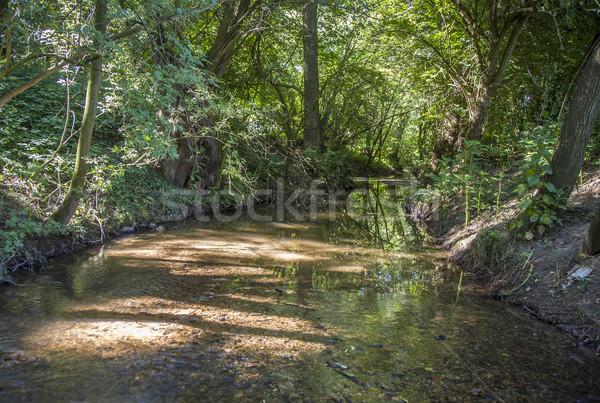Gyönyörű kicsi patak zöld fák napsugarak Stock fotó © meinzahn