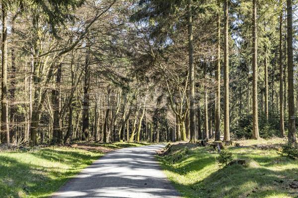 Ağaçlar öğleden sonra ışık orman Stok fotoğraf © meinzahn