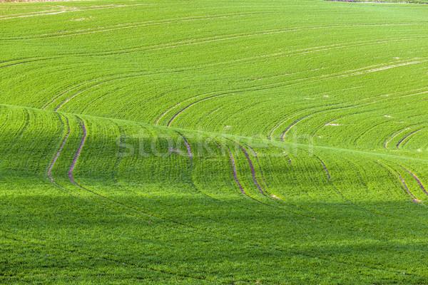 Linhas ondas pormenor veja campos primavera Foto stock © meinzahn