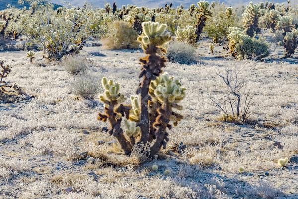 Mooie cactus tuin boom park namiddag Stockfoto © meinzahn