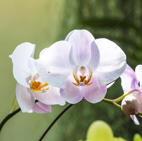 Orchidee giardino botanico Washington natura foglia giardino Foto d'archivio © meinzahn
