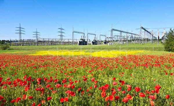 Elektrownia piękna kwiat łące wiosną charakter Zdjęcia stock © meinzahn