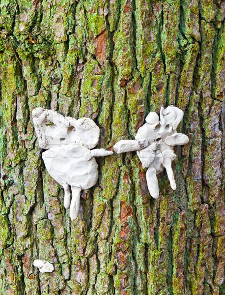 Homem esposa fora mastigar goma árvore Foto stock © meinzahn