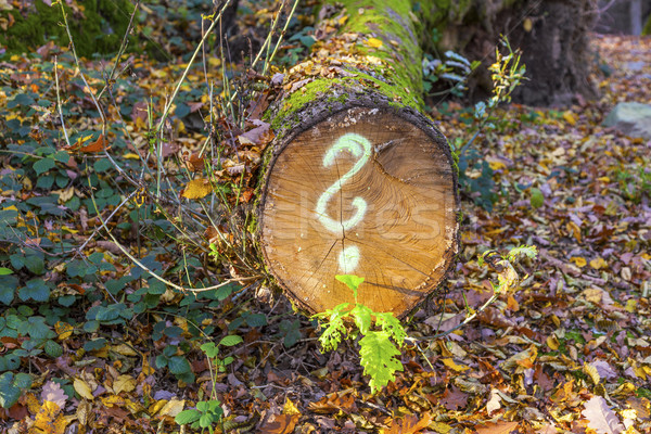tree in forest with painted question mark Stock photo © meinzahn