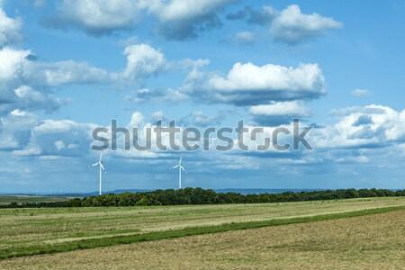 spica of wheat in corn field Stock photo © meinzahn