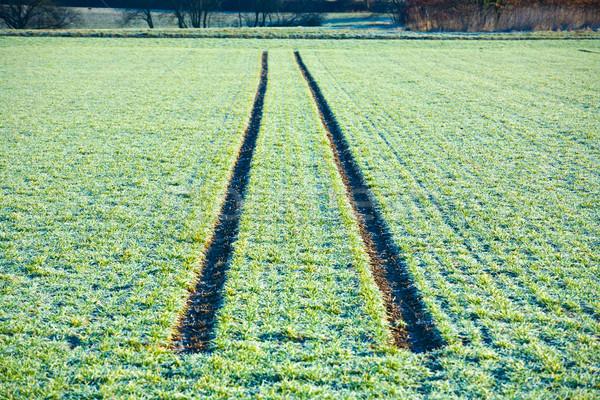mark of tire on snow field in winter Stock photo © meinzahn