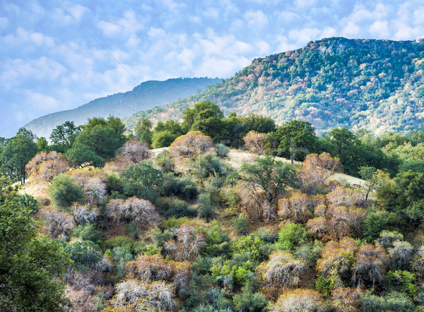 Ver vale sequóia parque pôr do sol Foto stock © meinzahn