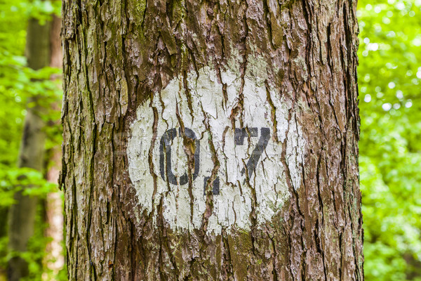 pattern of trees in forest with distance marker Stock photo © meinzahn