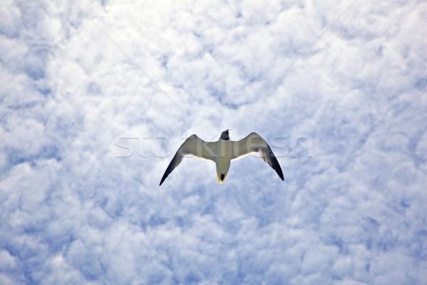 Gaviota vuelo cielo nubes aves grupo Foto stock © meinzahn