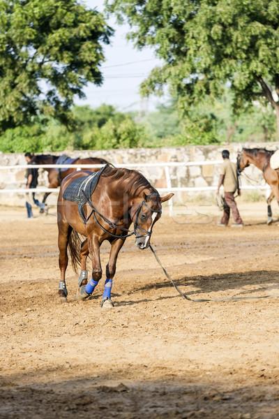 Barna ló képzett tanul különböző lovaglás Stock fotó © meinzahn