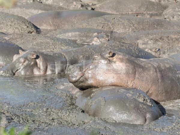Ontspannen water gat serengeti groep Stockfoto © meinzahn