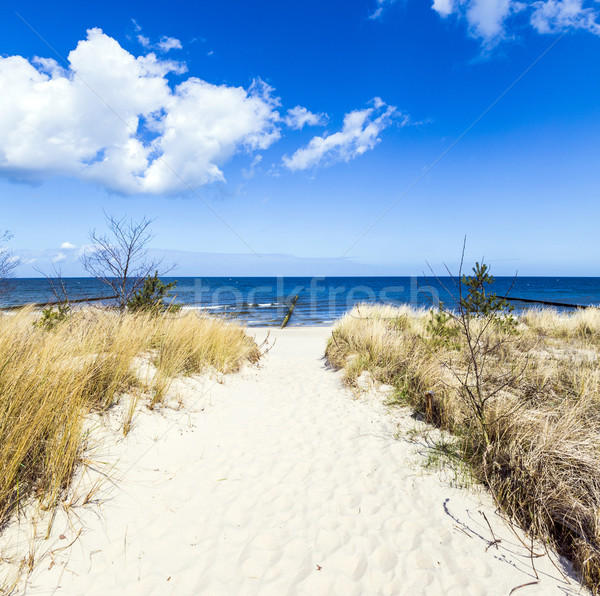levee with sandy path to beach at baltic sea Stock photo © meinzahn