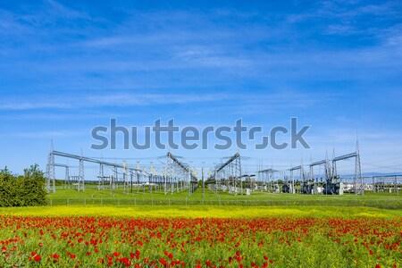 Energiecentrale mooie bloem weide voorjaar natuur Stockfoto © meinzahn