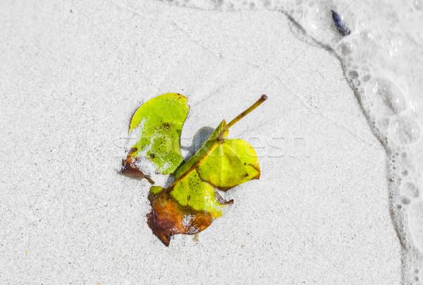 Mooie bladeren strand natuur harmonisch manier Stockfoto © meinzahn