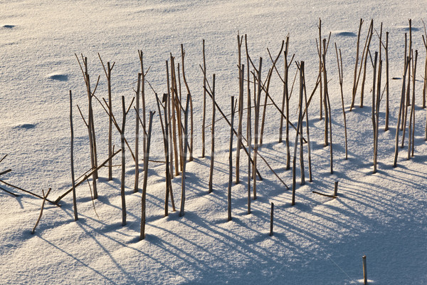 shadow of halm on snow covered field Stock photo © meinzahn