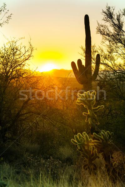 Kaktüs çöl romantik gün batımı güneş manzara Stok fotoğraf © meinzahn