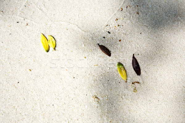 Stock photo: beautiful structured leaves at the beach arranged by nature