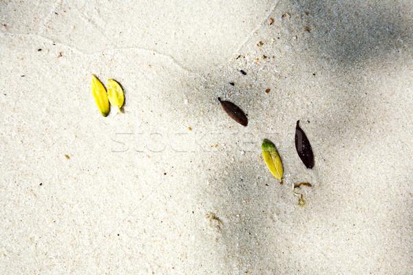 красивой листьев пляж природы линия Сток-фото © meinzahn
