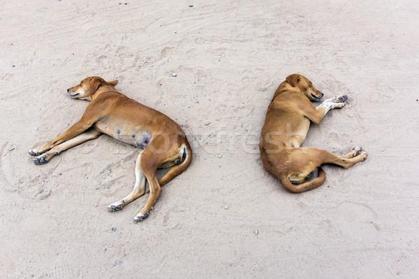 Iki köpekler erkek kadın uyku kum Stok fotoğraf © meinzahn