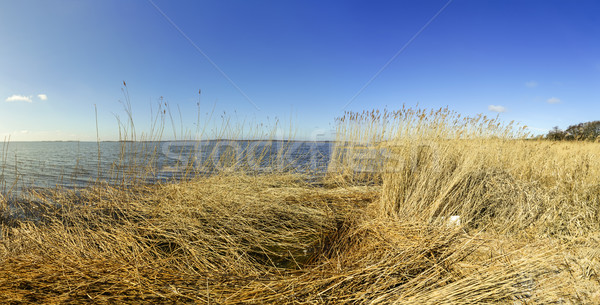 Ilha mar báltico grama paisagem mar campo Foto stock © meinzahn