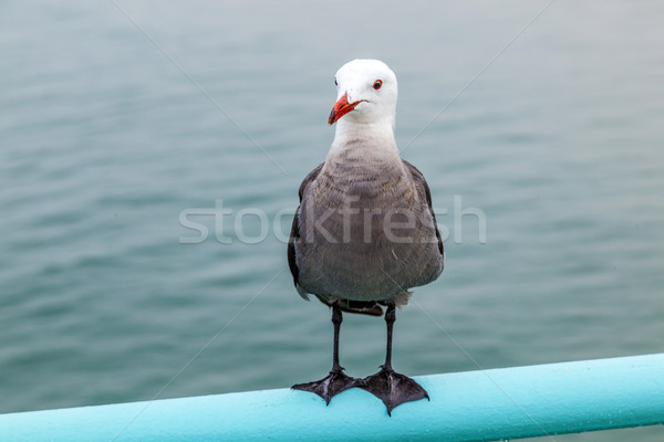 Stock photo: seagull sitting at the pier on the rail