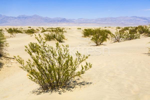 Secado desierto arena punto muertos Foto stock © meinzahn