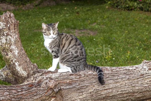 Gato assistindo caça noite cara amor Foto stock © meinzahn