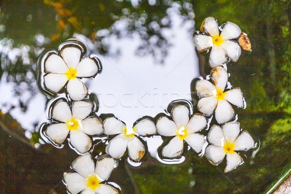 Virág lebeg víz fény kert vallás Stock fotó © meinzahn