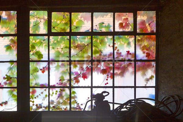 Eski pencere harmonik renkler sarmaşık büyüyen Stok fotoğraf © meinzahn