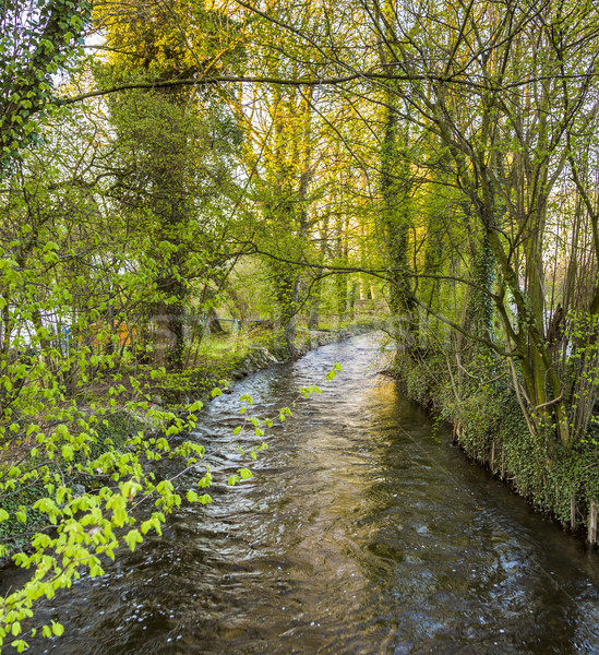 river Wuerm with green trees in Munich Stock photo © meinzahn