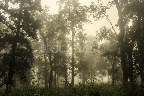 Park Nepál km fedett fa természet Stock fotó © meinzahn