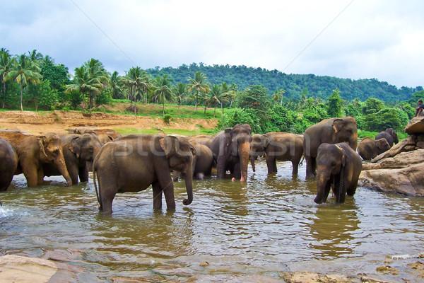 flock of elephants in the river  Stock photo © meinzahn