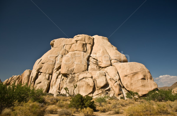 Scenic rocks and trees in Joshua tree national park Stock photo © meinzahn