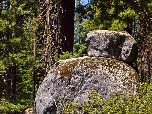 tall and big sequoias and stones in sequoia national park Stock photo © meinzahn