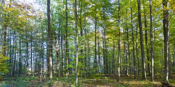 Harmonik model meşe ağaçlar orman bahar Stok fotoğraf © meinzahn