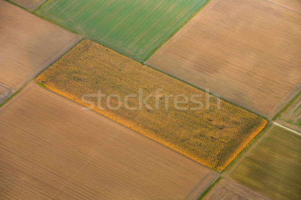rural landscape with acre  Stock photo © meinzahn
