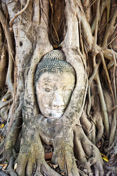buddha face covered by roots Mahathat temple Stock photo © meinzahn