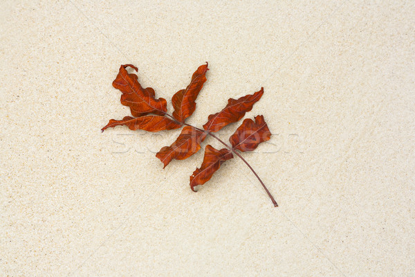 Stock photo: beautiful structured leaves at the beach arranged by nature in a
