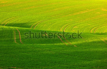 landscape with freshly plowed fields and green plants Stock photo © meinzahn