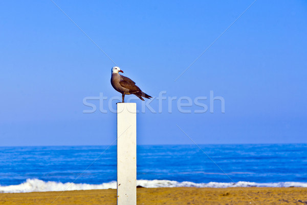 seagull sitting on a pile for volleyball at the beach and watche Stock photo © meinzahn