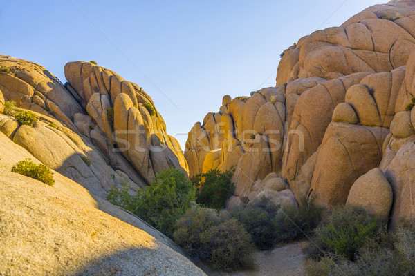 scenic Jumbo rock in Joshua Tree National Park Stock photo © meinzahn