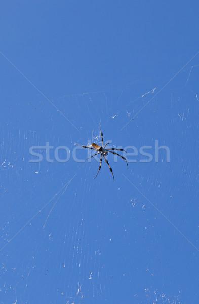 örümcek web mavi gökyüzü gökyüzü arka plan bacaklar Stok fotoğraf © meinzahn