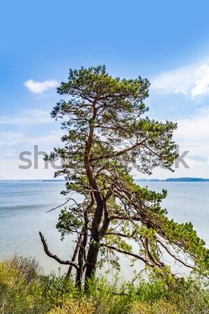 Romantyczny stromy Urwisko jezioro trawy charakter Zdjęcia stock © meinzahn