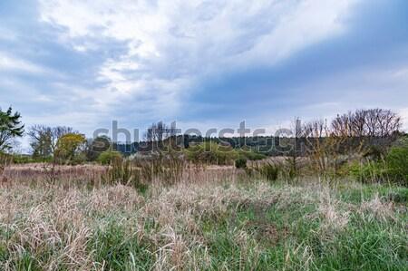 reed landscape in Usedom Stock photo © meinzahn