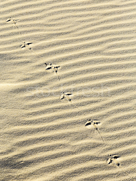background of sand ripples at the beach with prints of feet Stock photo © meinzahn