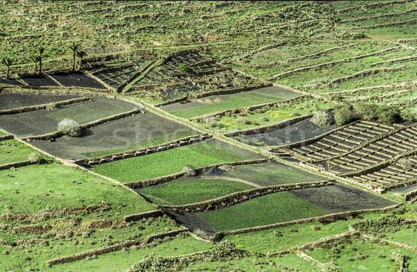 fields in Lanzarote on black volcanic soil Stock photo © meinzahn